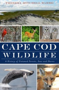 225-2.0 cape cod wildlife